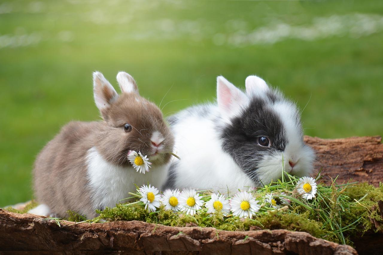 Gdzie hodować króliki? Wykot królików zimą