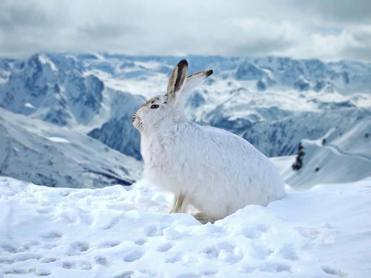 Żywienie królików zimą. Co jedzą króliki zimą?