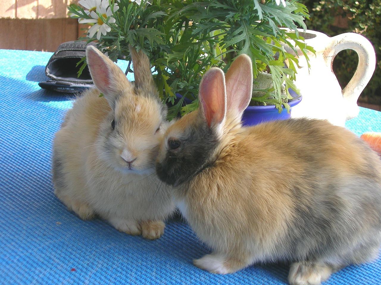 Dlaczego królik tupie? Królicza mowa ciała.